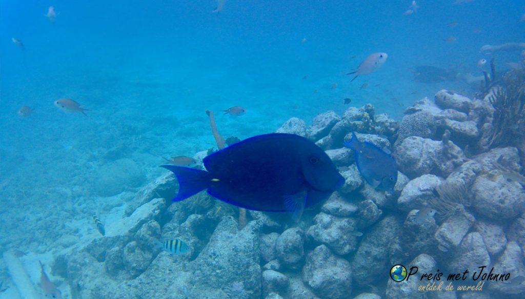 Vissen Playa Lagun