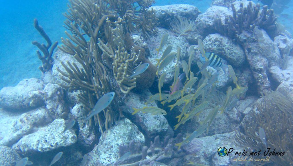 De onderwaterwereld van Playa Lagun