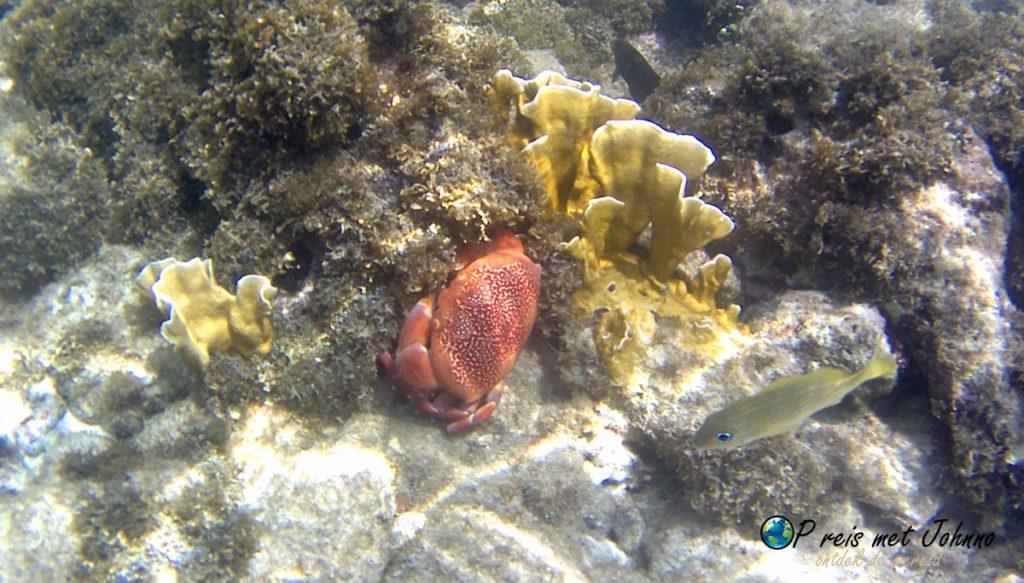 De onderwaterwereld bij Jan thiel.
