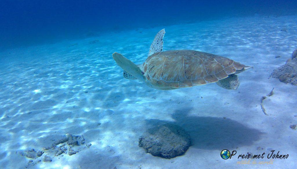 Schildpadden spotten tijdens je vakantie op curaçao kan bij Westpunt