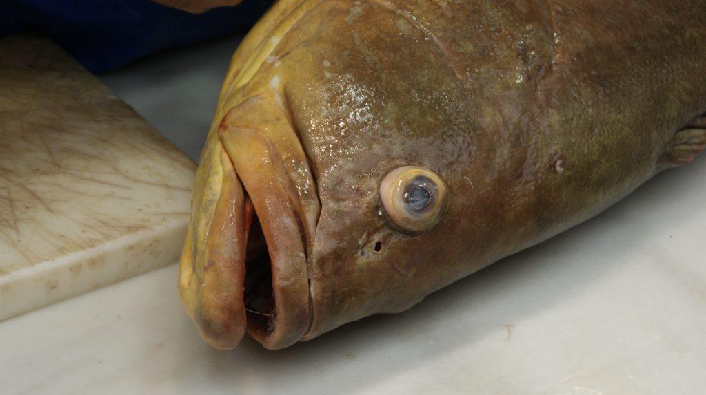 De vis kijkt je aan in de markthal van Malaga