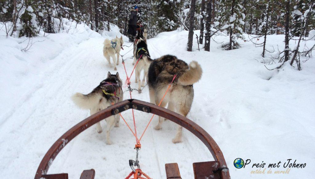Ze de husky's rennen tijdens de husky tocht