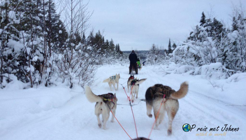 Rijden met husky's door het witte landschap in Lapland Zweden