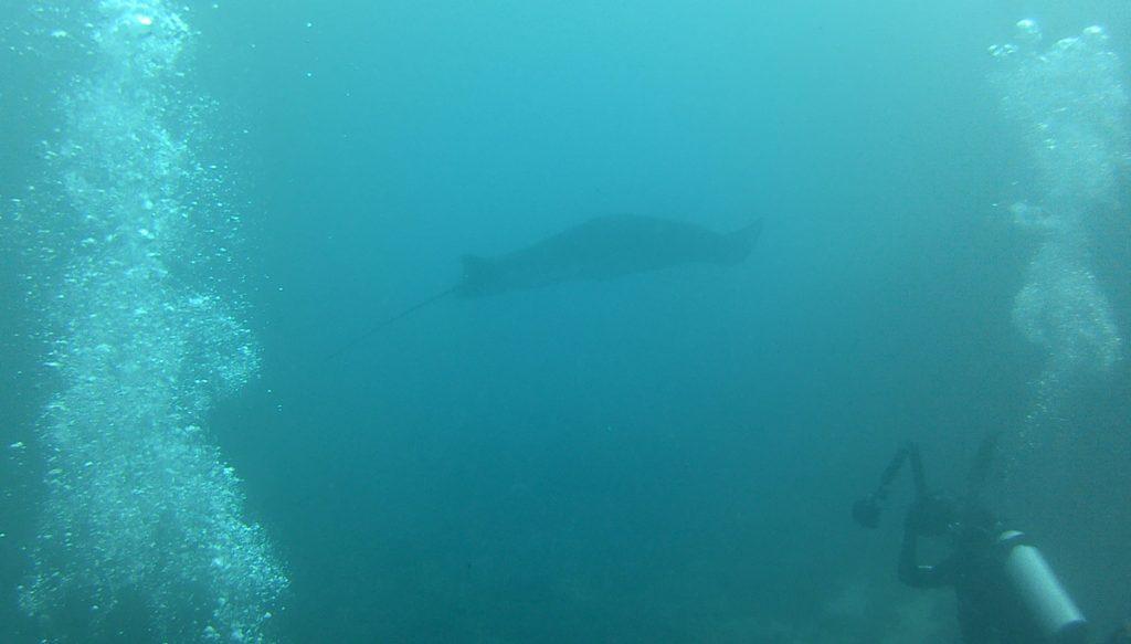 Duiken met Manta roggen bij manta point