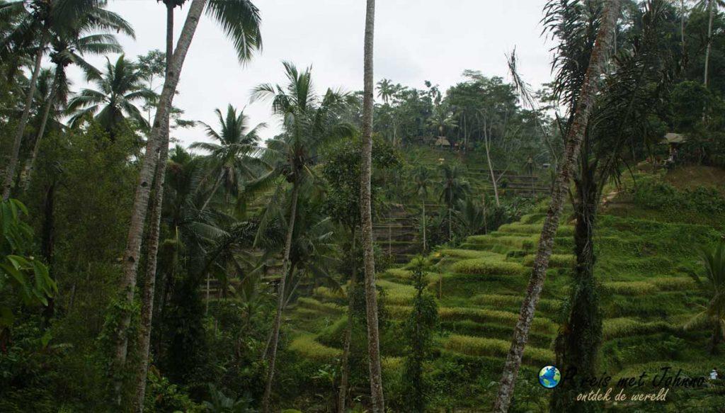 Wat een plaatje inde Tegalalang rijstterrassen