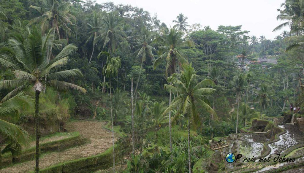 Uitzicht vanaf de andere kant in de Tegalalang rijstterrassen