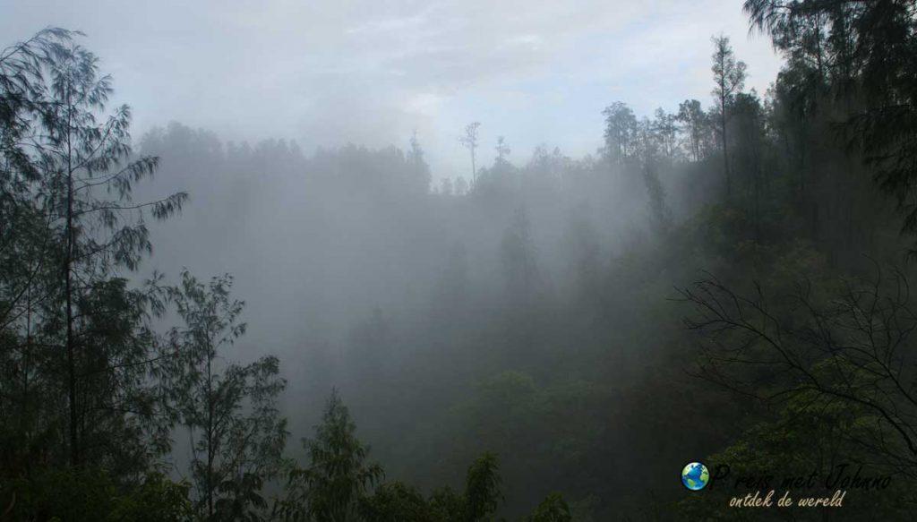 Het bos van de hike naar Kawah Ijen