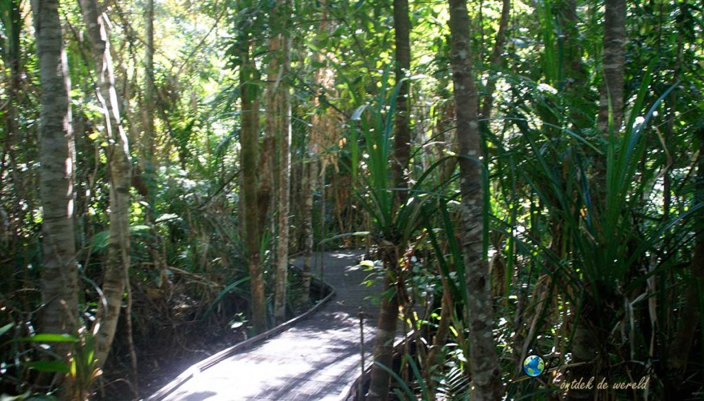 Een van de boardwalks in het daintree regenwoud