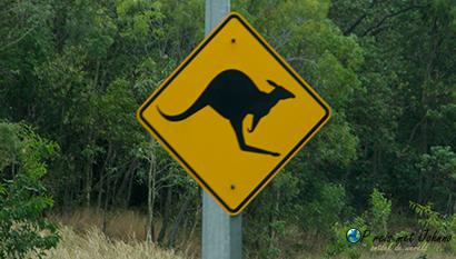 Pas op kangoeroes in de oostkust van Australië