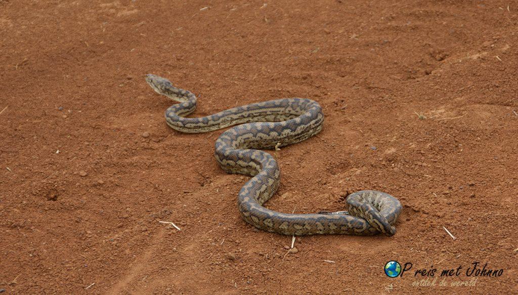De carpetsnake die ik tegen kwam in de outback van Australië