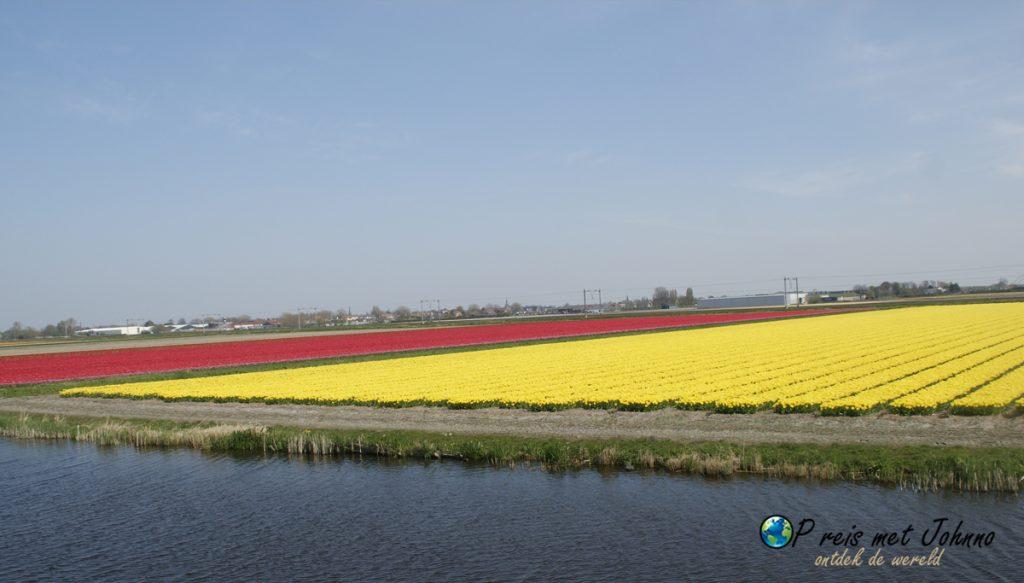 De tulpen en leidsevaart op de beste route langs de bollenvelden in De Zilk