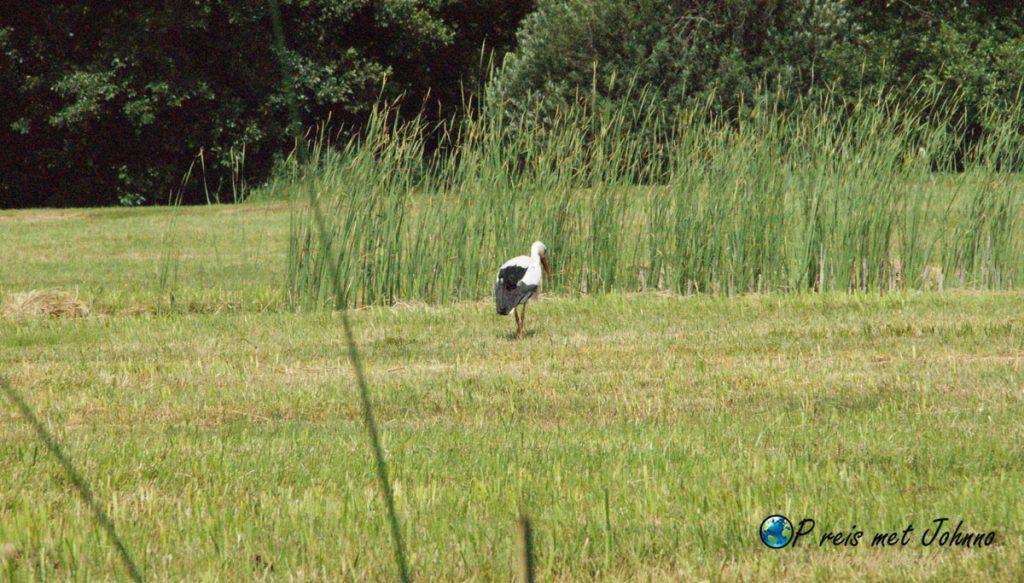 Een van de dieren bij Giethoorn